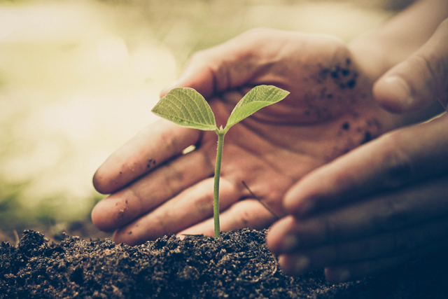 A person dipping his hand in the soil in order to cover a sapling