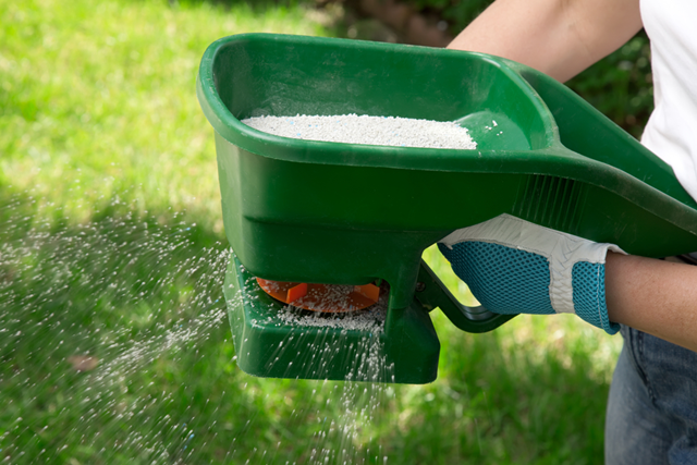 Gardener using a fertilizer spreader to spread fertilizer all over his garden