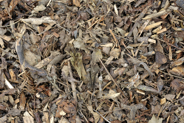Mulch made from wood chips and leaves are spread throughout the garden