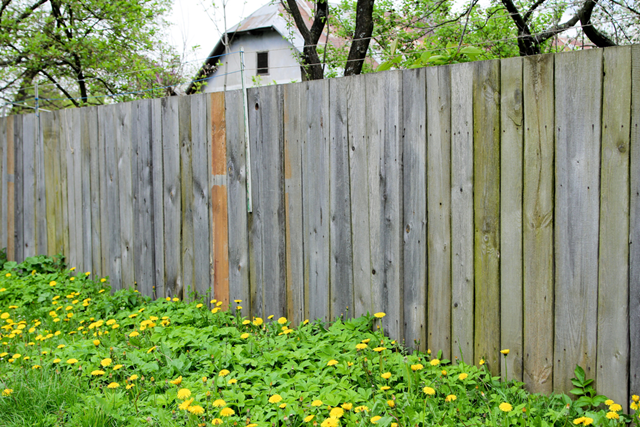 Old wood fence surrounding a beautiful flower bed full of yellow flowers