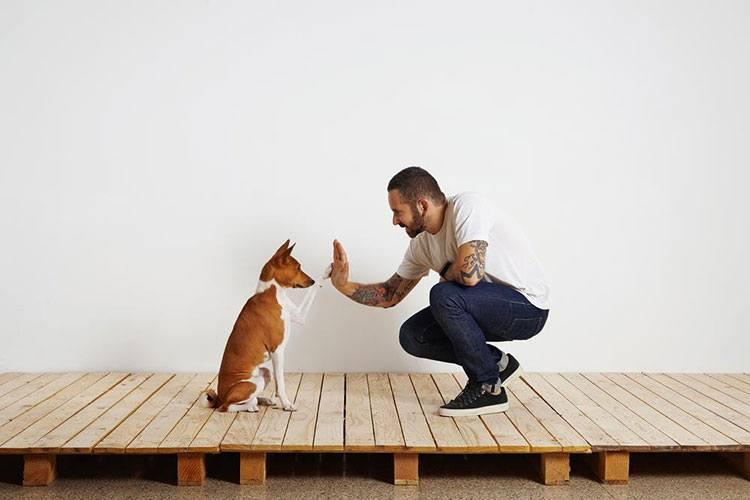 dog-and-human