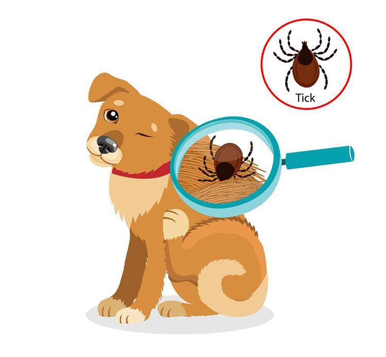dog-pests