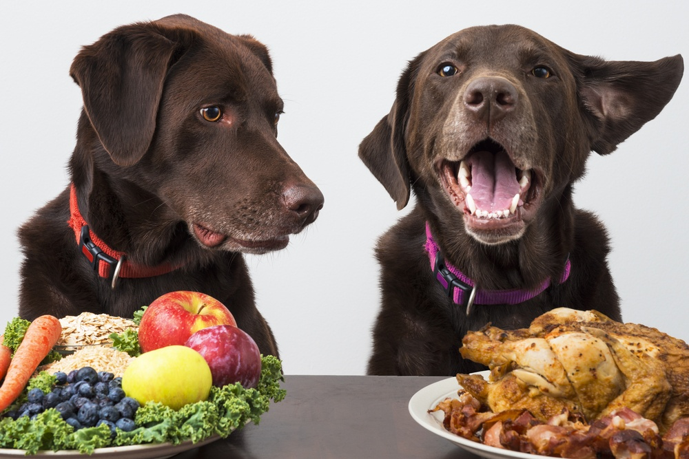 food-diet-for-dogs