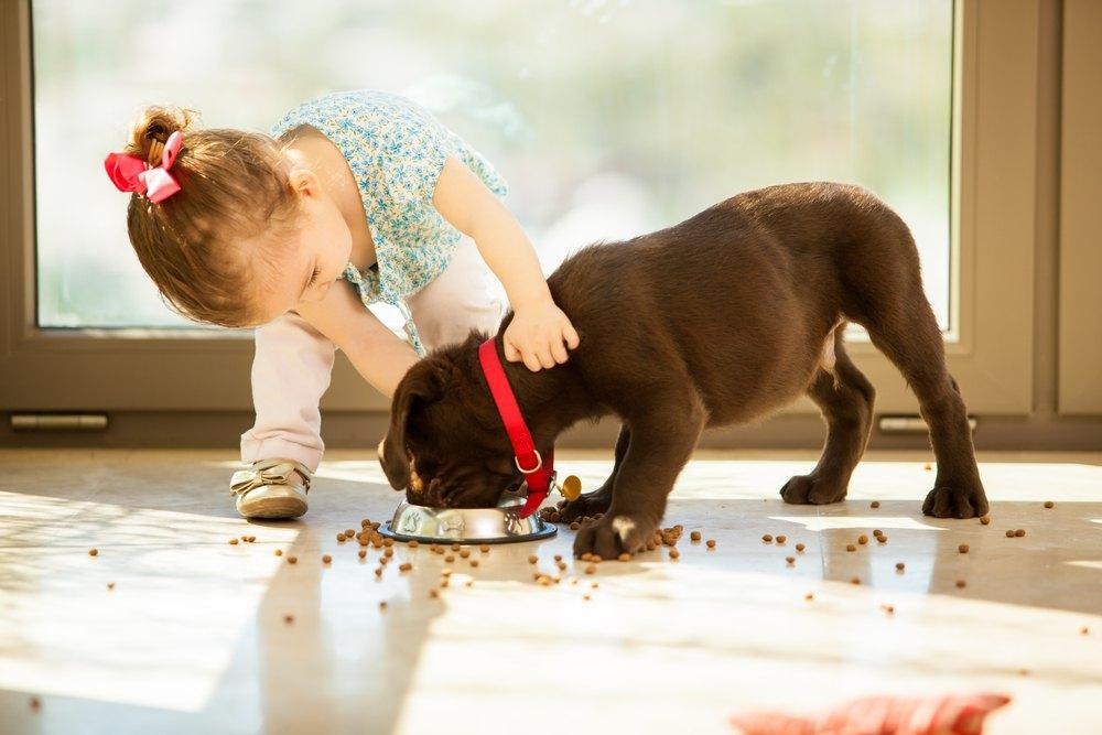 tip-for-feeding-dog