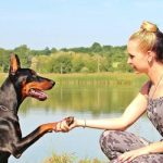 How Dogs Can Improve Your Physical And Mental Health
