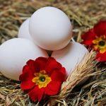 10 Amazing Ways to Enjoy Boiled Eggs