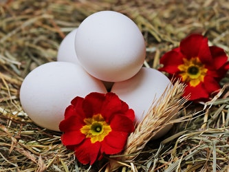 Eggs Featured Image