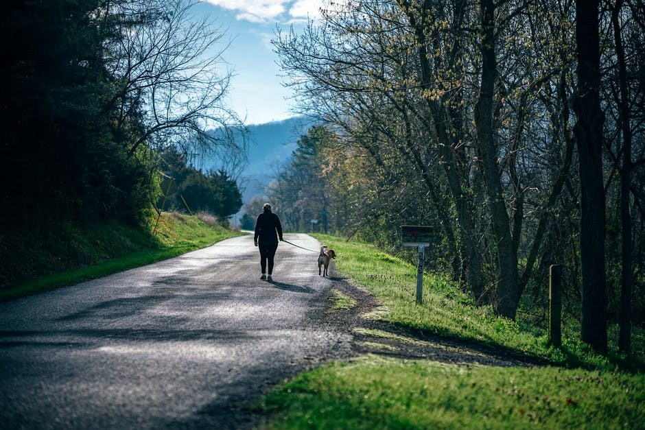 Get Your Pet to a Walk