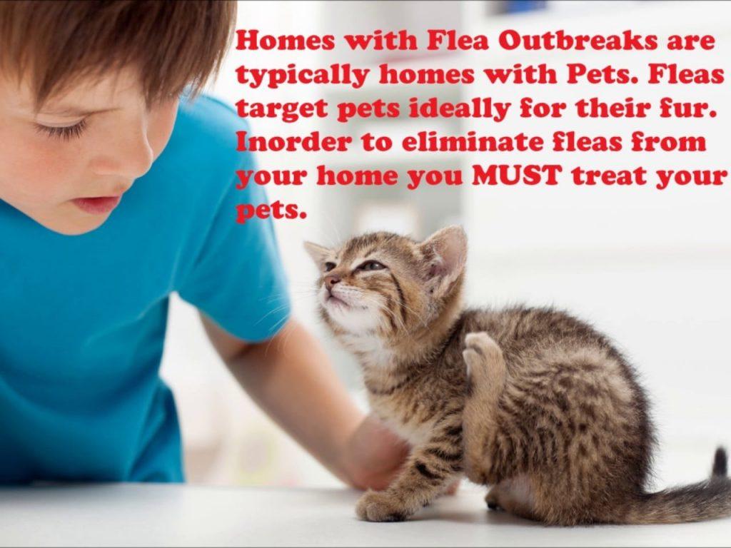 Plan a Regular Parasite Control