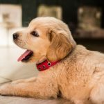 How To Train Your New Puppy [6 Effective Tips]