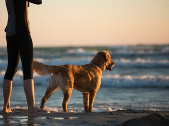 Your Dog's Arthritis