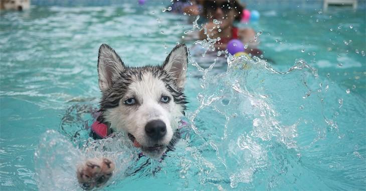 Husky's Bath