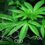 The Green Wonder: What Are 4 Seldomly Discussed Health Benefits of Medical Marijuana?