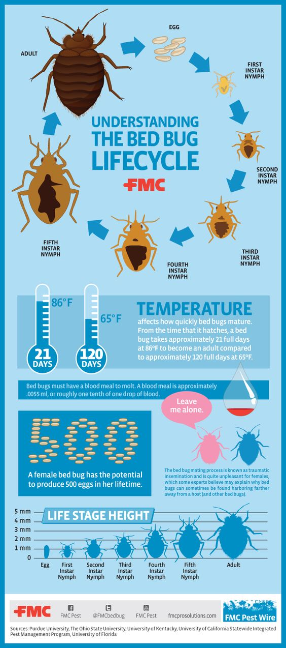 The Fastest Way To Eliminate Bed Bugs Shl