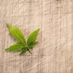 10 Most Important Cannabinoids and Their Health Benefits