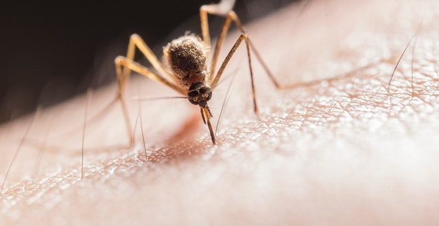 Malaria Vs Dengue