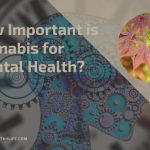 How Important is Cannabis for Mental Health?