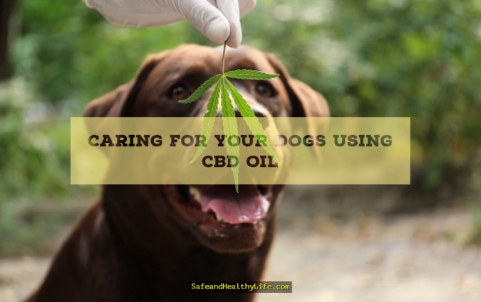 Caring for Your Dogs Using CBD Oil