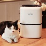 Okaysou AirMic4S Air Purifier Review: Learning Why Adding this Device Can Help US to Stay Safe