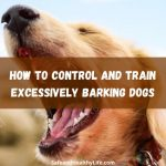 How to Control and Train Excessively Barking Dogs