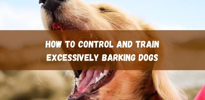 Control and Train Excessively Barking Dogs