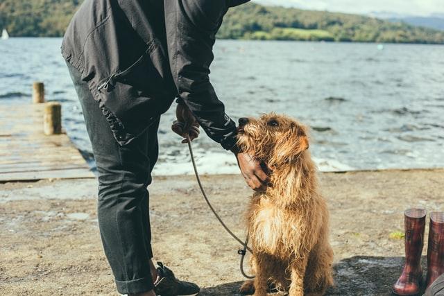 Dog coats and skin