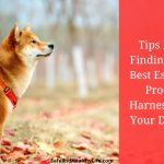 Tips For Finding the Best Escape Proof Harness for Your Dog