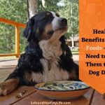 Health Benefits of Dog Foods - Do I Need to Add Them to My Dog Diet?