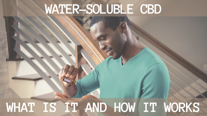 Water-soluble CBD_ What it is and how it works