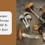 3 Unique Mushrooms to Add To Your Diet