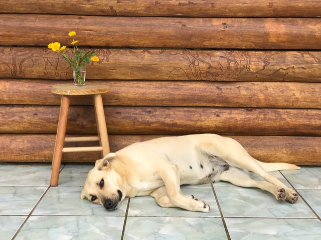 Give Your Dog Their Own Spot