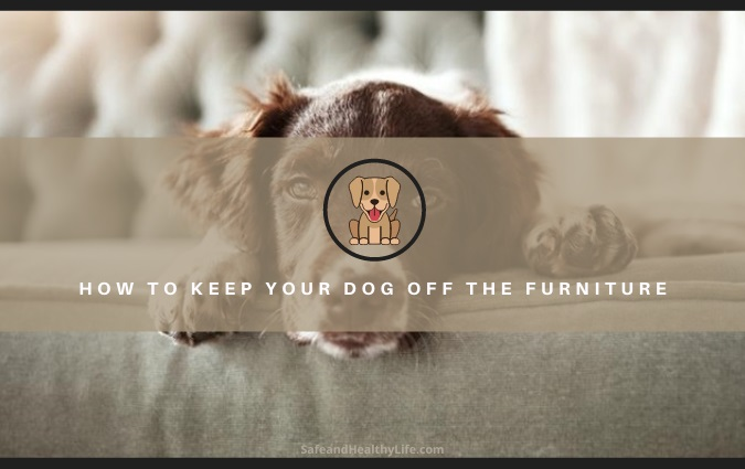 Keep Your Dog Off the Furniture
