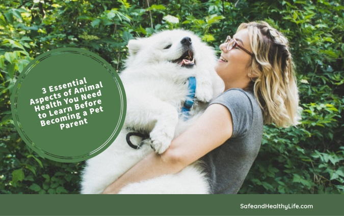 3 Essential Aspects of Animal Health