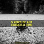 5 Risks of Ant Colonies at Home