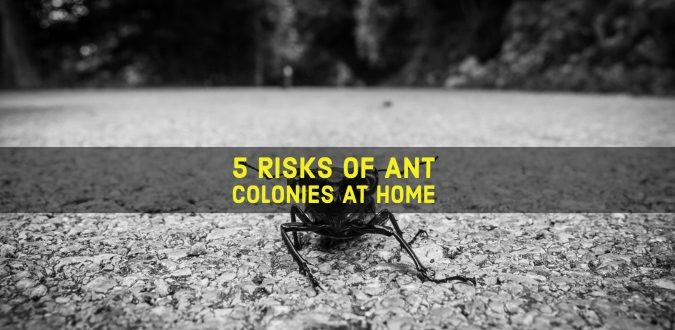 Ant Colonies at Home