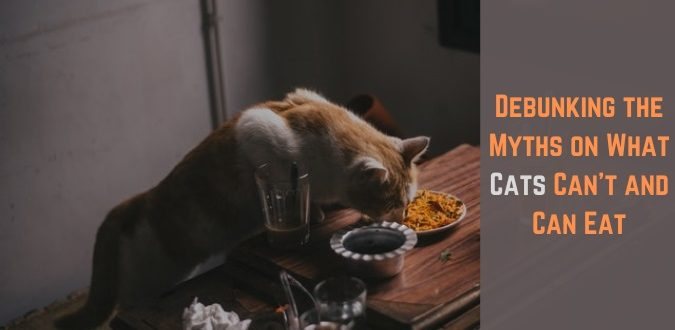 What Cats Can't and Can Eat
