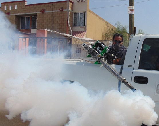 Pest Removal Firms