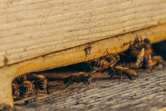 Remove Pests