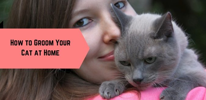 Groom Your Cat at Home