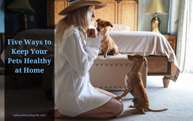 Keep Your Pets Healthy